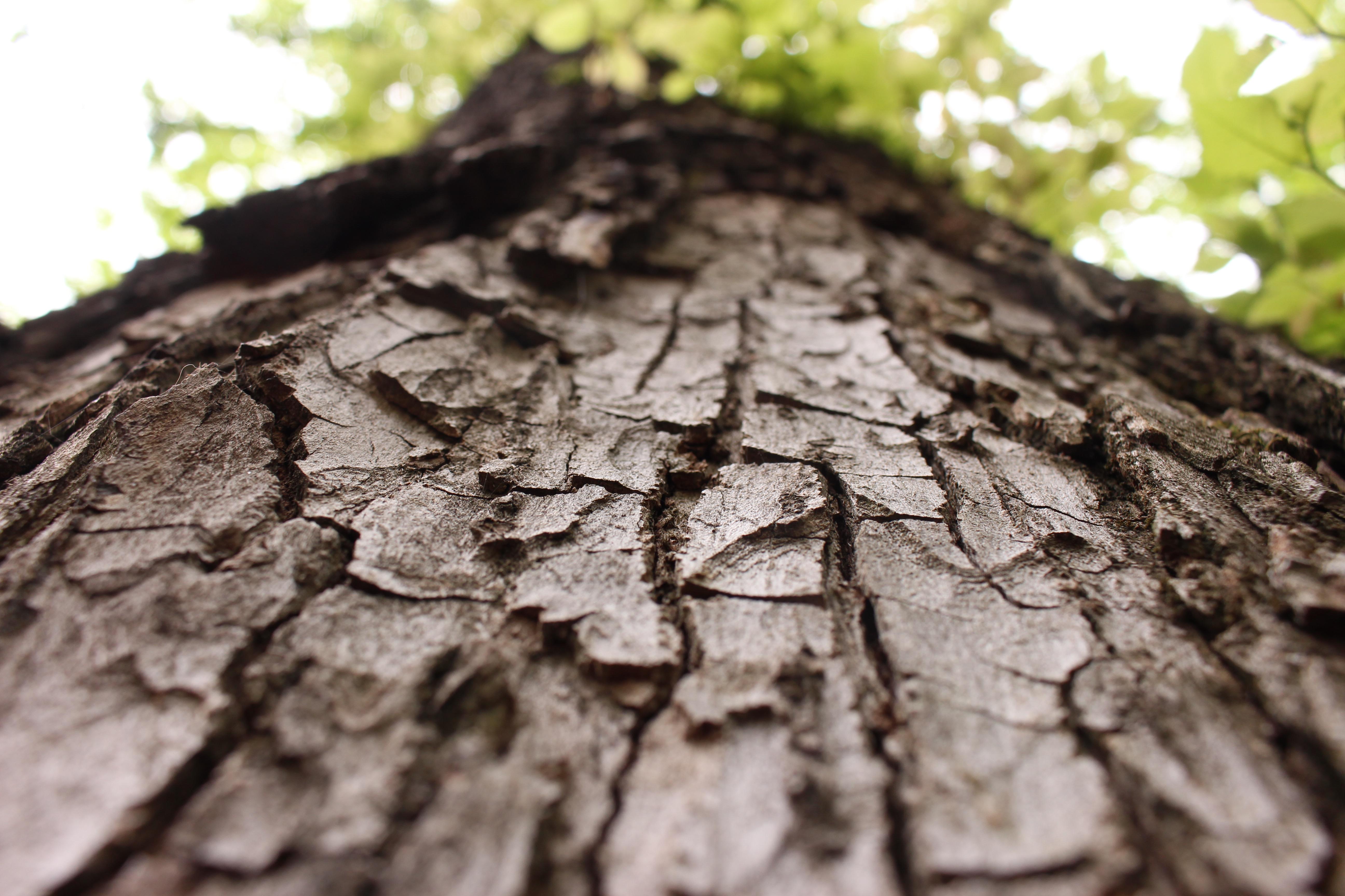 Park Block Elm Tree/Alex Skousen