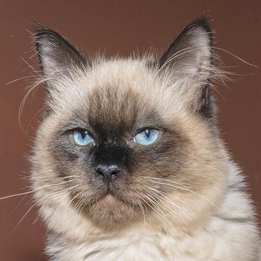cat-1613085_1280