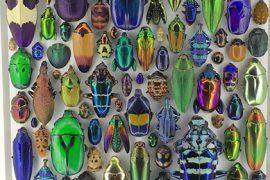 OMSI Exhibit: Exquisite Creatures